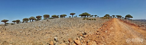 Socotra's landscape