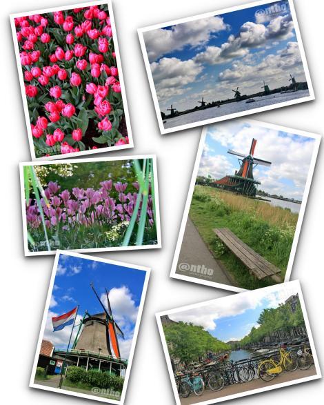Kolase Belanda